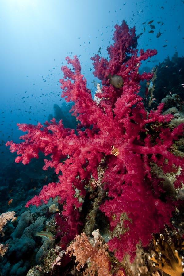 le soleil d'océan de poissons image libre de droits