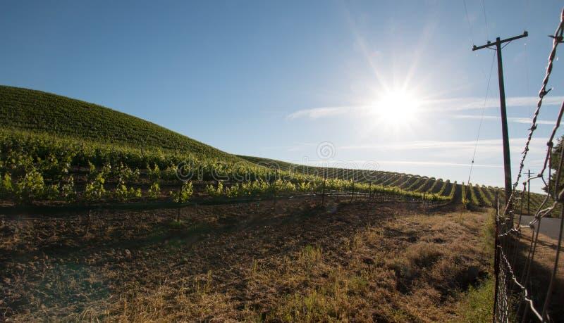 Le soleil de début de la matinée brillant sur des vignobles de Paso Robles dans le Central Valley de la Californie Etats-Unis images stock