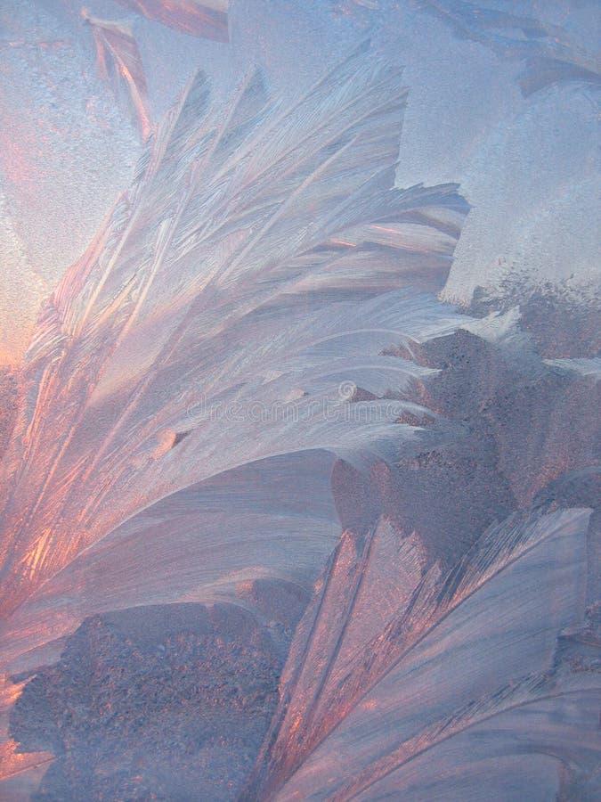 le soleil de gel photographie stock libre de droits