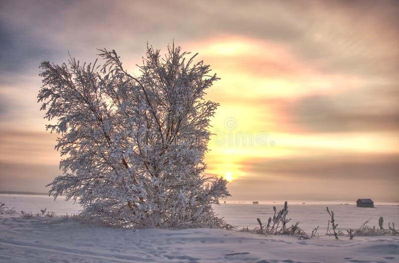 Le soleil de janvier images stock