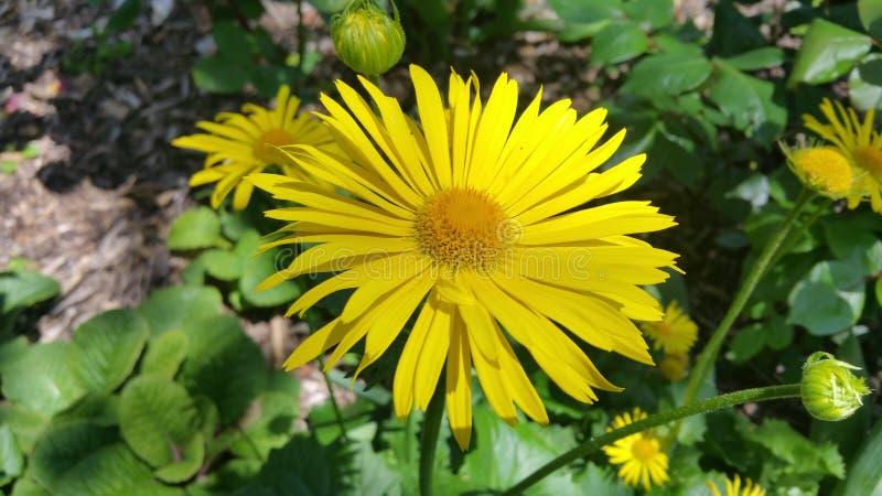 Le soleil de jardin de plantes et de fleurs de l'Espagne photos libres de droits