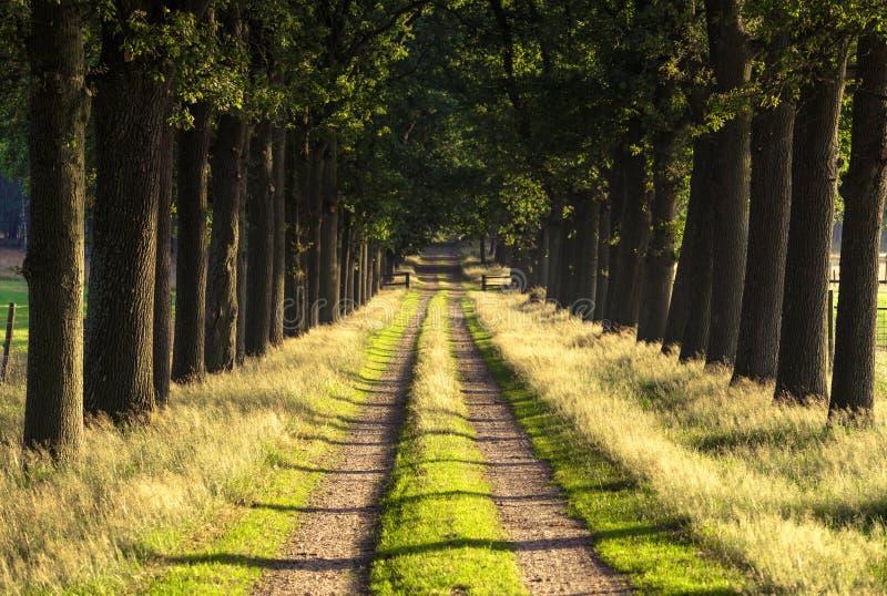 Le soleil de matin dans forrest dans un tunnel aiment la route images libres de droits
