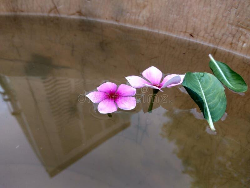 le soleil de photographie de nature fleurit des inscets de créativité d'argile image libre de droits