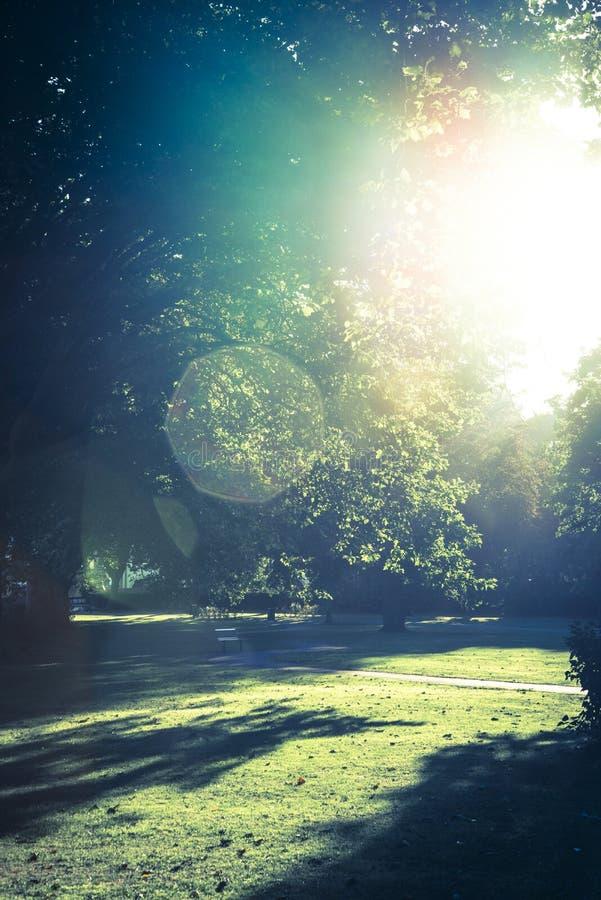 Le soleil en retard en parc photographie stock libre de droits