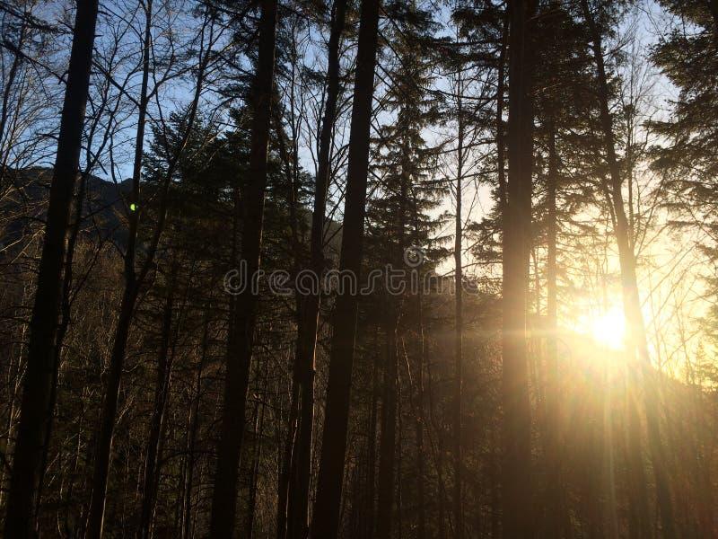 Le soleil et la forêt photographie stock libre de droits
