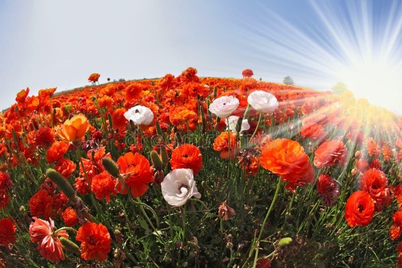 Le soleil et les fleurs photos libres de droits