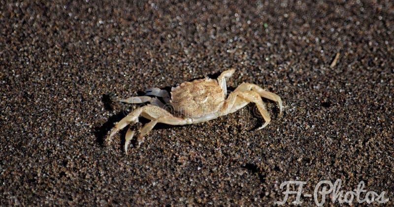 Le soleil impressionnant de sable de beauté animale image stock
