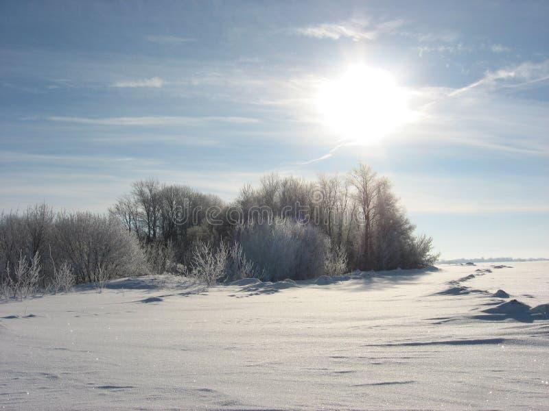Le soleil lumineux au-dessus de la forêt d'hiver photos stock