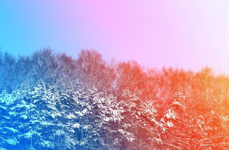 Le soleil lumineux de coucher du soleil photo libre de droits