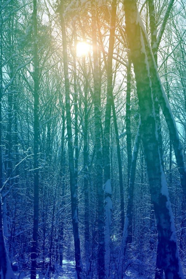 Le soleil lumineux de coucher du soleil photos libres de droits