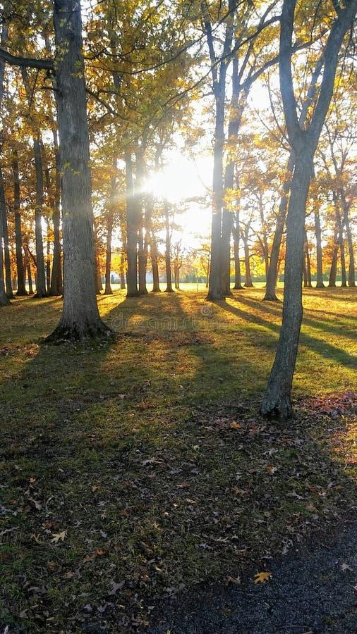 Le soleil lumineux de soirée photos stock