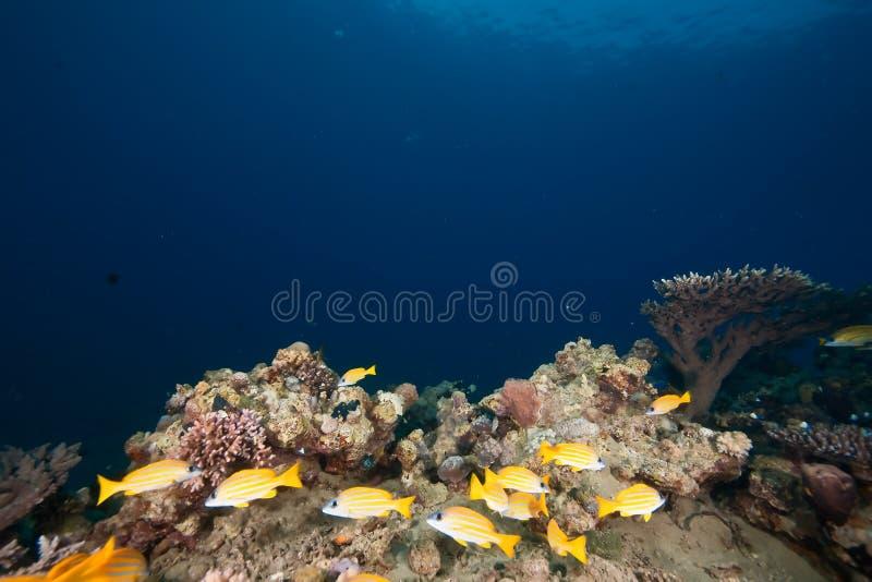 le soleil rayé de cordelette bleue d'océan photos libres de droits