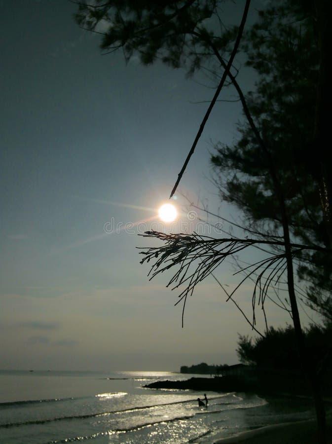 Le soleil se lève dans les coulisses d'un pin photos stock
