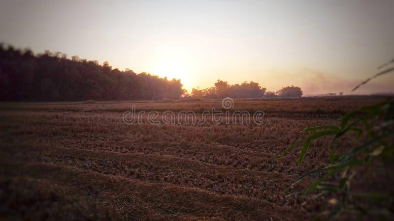 Le soleil se lève dans les domaines moissonnés de riz images stock