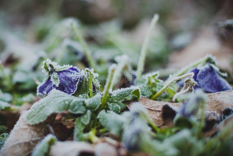 Le souffle de l'hiver photos libres de droits