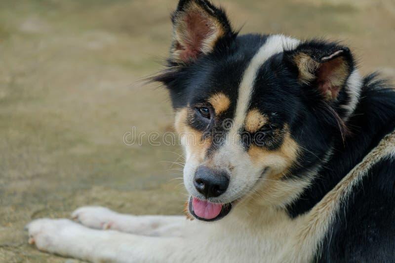 Le sourire de chien photographie stock