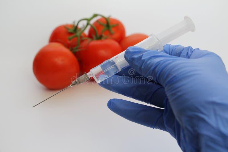 Le sp?cialiste en GMO injecte le liquide d'une seringue dans une tomate rouge photos libres de droits