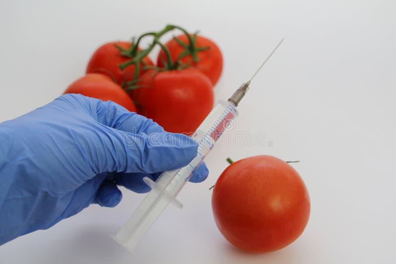 Le sp?cialiste en GMO injecte le liquide d'une seringue dans une tomate rouge images libres de droits
