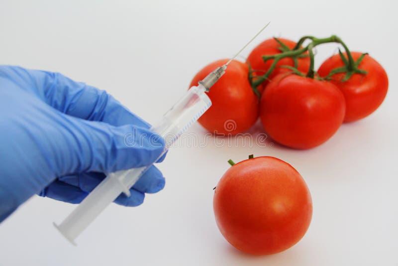 Le sp?cialiste en GMO injecte le liquide d'une seringue dans une tomate rouge photos stock