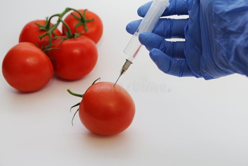 Le sp?cialiste en GMO injecte le liquide d'une seringue dans une tomate rouge image libre de droits