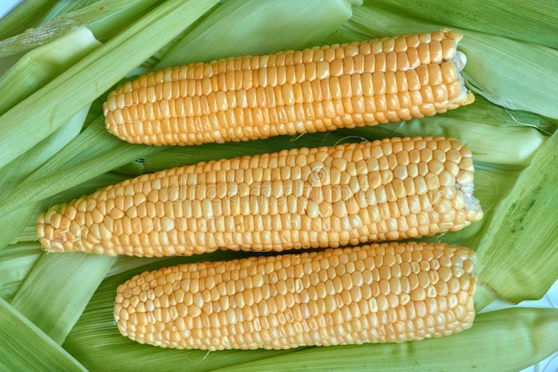 Le spighe del granoturco che si trovano sui precedenti di cereale va immagine stock