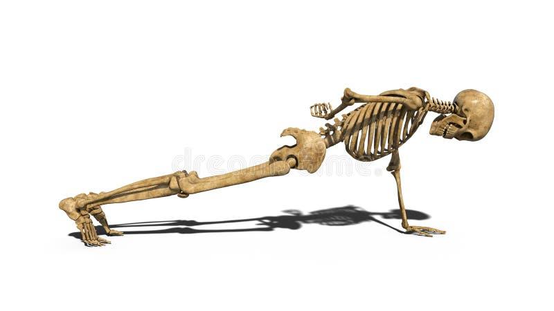 Le Break Dance Squelettique Drôle Sur Le Plancher, Squelette Humain S'exerçant Sur Le Fond Blanc ...
