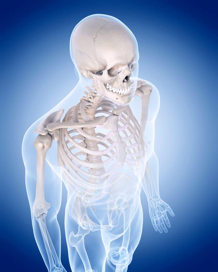 Le squelette humain - le corps supérieur illustration stock