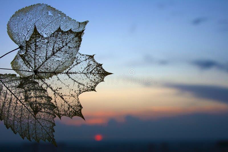Le squelette transparent d'automne part du fond images libres de droits