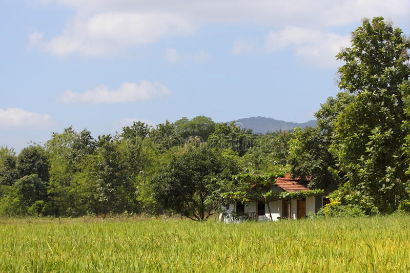Le Sri Lanka rural image libre de droits