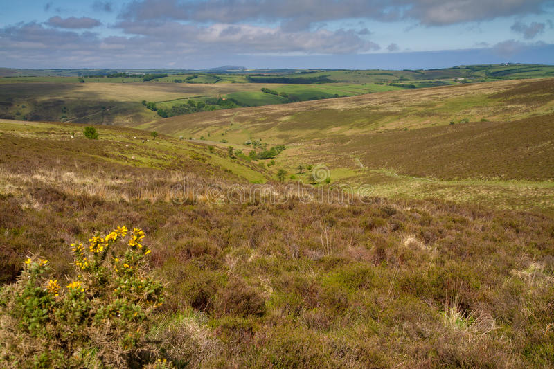 Le stationnement national d'Exmoor au Devon, Angleterre photos stock