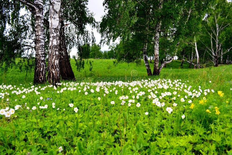 Le steepe Altaya de Flowerses photographie stock