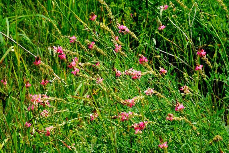 Le steepe Altaya de Flowerses photo libre de droits