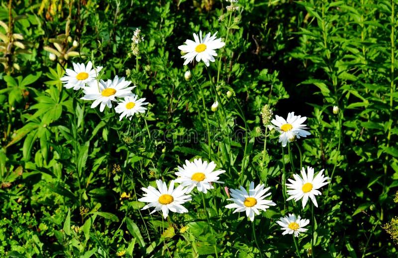 Le steepe Altaya de Flowerses image libre de droits