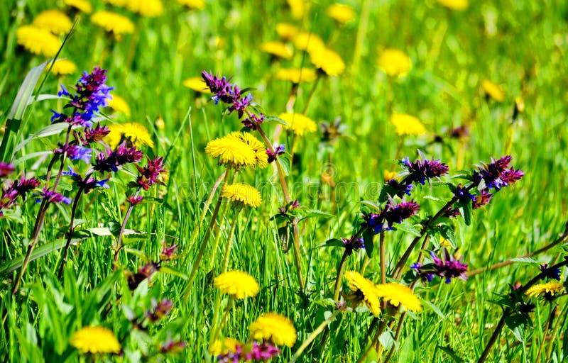 Le steepe Altaya de Flowerses photographie stock libre de droits