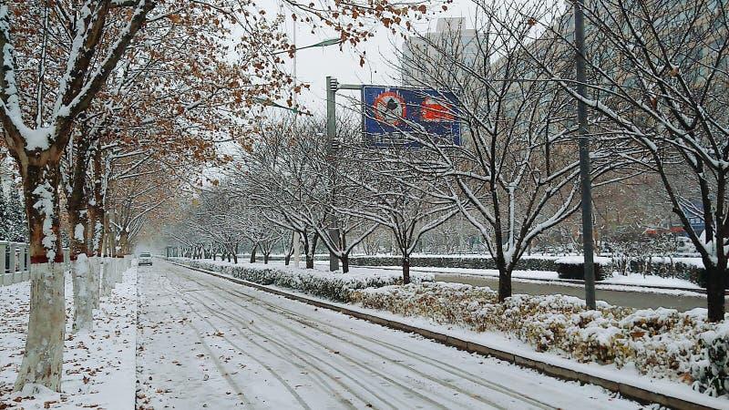 Le strade e gli alberi dell'inverno sulla strada di Taikang a Luoyang sono coperti di neve immagini stock libere da diritti