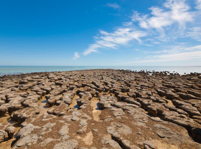 Le Stromatolites dans le secteur de la baie de requin, Australie occidentale l'autralasie images stock