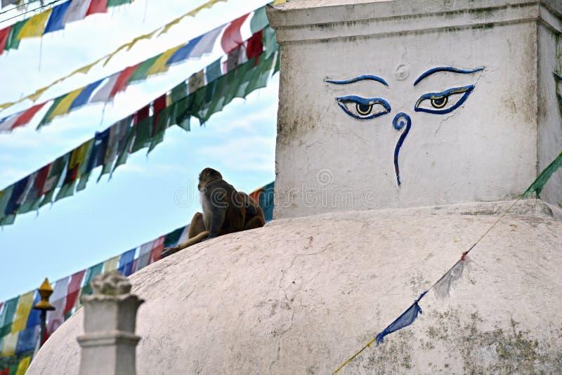 Le stupa bouddhiste de Swayambhunath, Katmandou est resté intact ensuite photo libre de droits