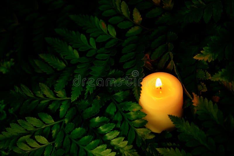Le style d'image de vintage sur peu de bougie blanche se trouve sur les feuilles vertes photographie stock libre de droits