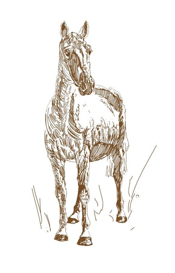 Le style de cru de vecteur a gravé les chevaux tirés par la main Griffonnage de cheval illustration de vecteur