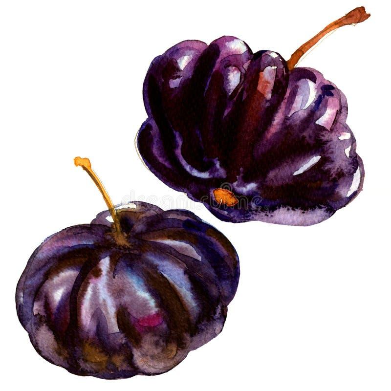 Le Surinam noir Cherry Pitanga, fruit tropical d'uniflora d'Eugenia, d'isolement, illustration d'aquarelle sur le blanc illustration stock