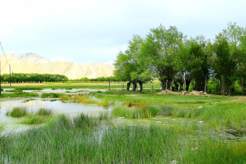 Le swampland du Thibet photo stock