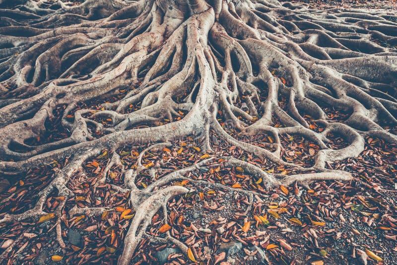 Le système de racine d'arbre au sol Fond photographie stock libre de droits