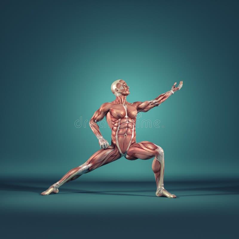 Le système musculaire illustration de vecteur
