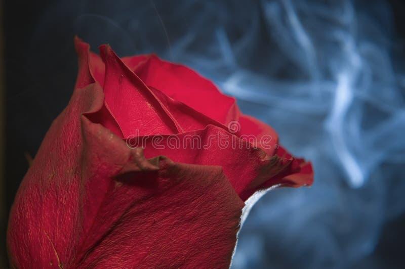 Le tabagisme a monté photos libres de droits