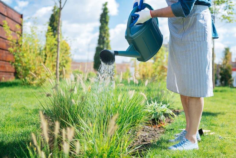 Le tablier rayé de port de jardinier et les espadrilles blanches arrosant son jardin enfoncent photographie stock