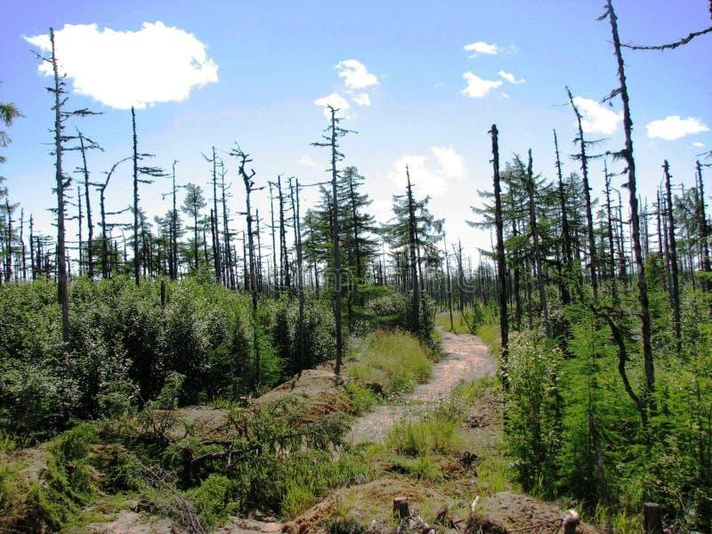 Le taiga de Sakhaline photos stock