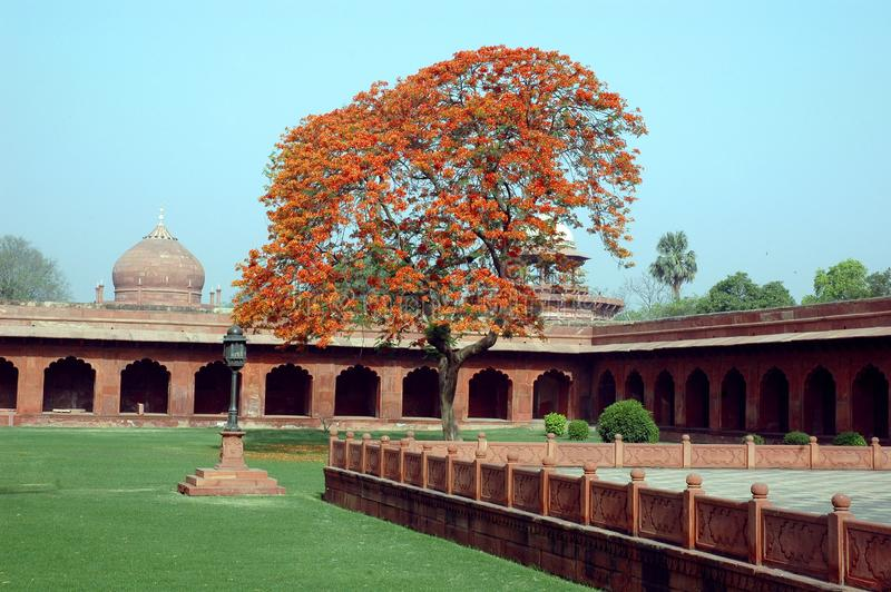 Le Taj Mahal de l'Inde. image libre de droits