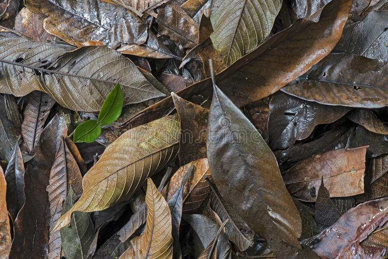 Le tapis des morts laisse la décomposition dans le plancher de forêt image stock