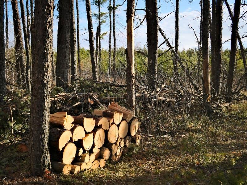 Le tas de bois du pin récemment récolté ouvre une session la forêt près d'un cottage confortable images libres de droits