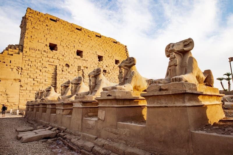 Le temple de Karnak à Louxor au coucher du soleil et au Ram a dirigé des statues de sphinx dans l'avant photographie stock libre de droits